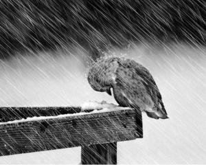 Surviving The Storm