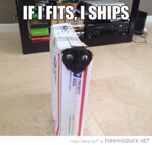 Funny cat memes 2 Blog - 25July2016