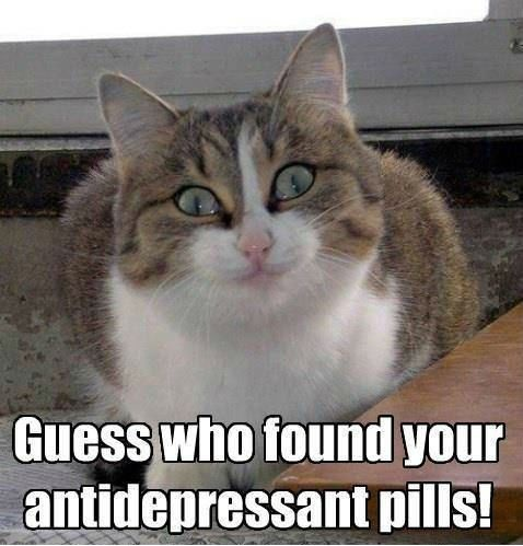 Cat meme - anti depressants